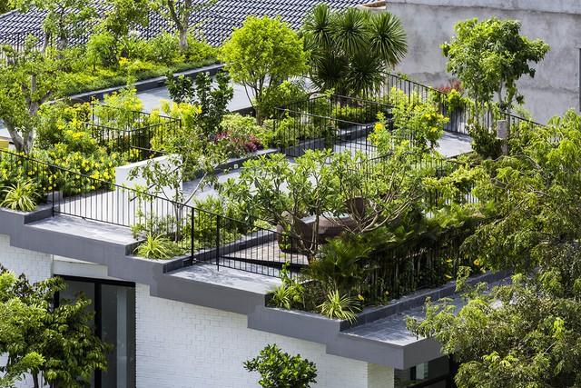Ngôi nhà có vườn treo tại Nha Trang - Ảnh 3.