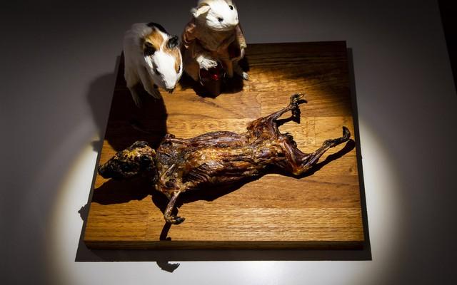Bảo tàng kỳ lạ tại Thụy Điển: Trưng bày những thức ăn kinh dị nhất thế giới - Ảnh 5.