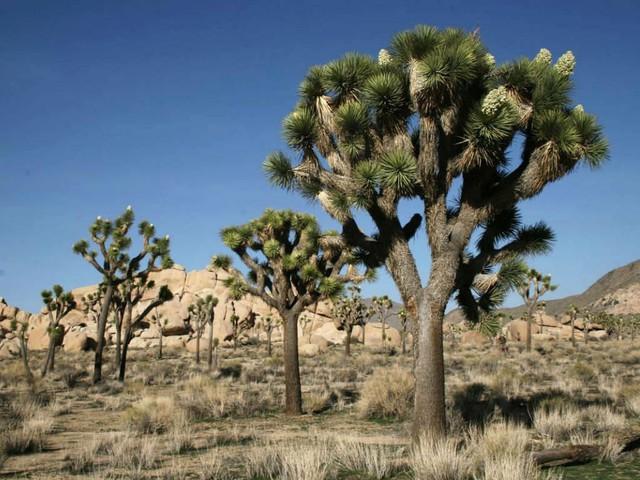 Loài cây... mọc siêu chậm: cả năm mọc được 3cm và đây là lý do tại sao - Ảnh 1.