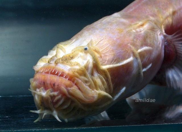 Con vật này chứng minh nước Úc là nơi bạn có thể tìm thấy những điều kỳ lạ nhất, kể cả... quái vật ngoài hành tinh - Ảnh 1.