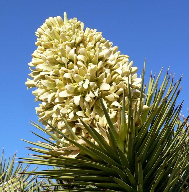 Loài cây... mọc siêu chậm: cả năm mọc được 3cm và đây là lý do tại sao - Ảnh 3.