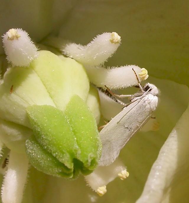 Loài cây... mọc siêu chậm: cả năm mọc được 3cm và đây là lý do tại sao - Ảnh 7.