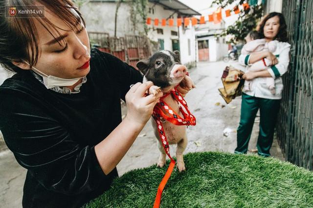Giữa sức nóng dịch tả, giới trẻ Hà thành vẫn săn lùng lợn cảnh mini giá vài triệu làm thú cưng - Ảnh 12.