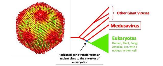 Phát hiện virus có khả năng như quái vật Medusa của thần thoại Hy Lạp - Ảnh 1.