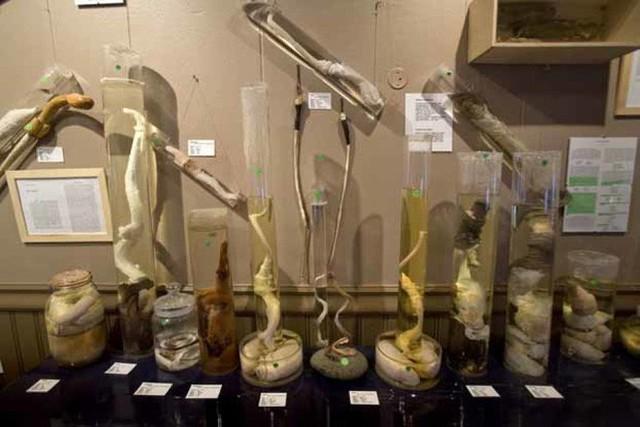 10 viện bảo tàng kỳ dị trên thế giới, tất cả chúng đều sẽ làm bạn ngỡ ngàng - Ảnh 7.