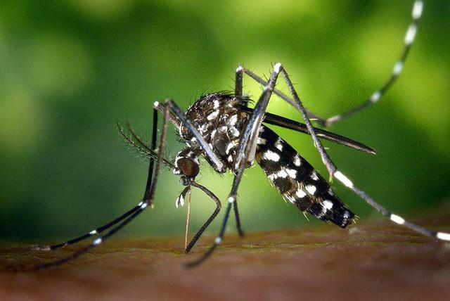 Muỗi có bị say hay không, khi hút máu những người vừa uống rượu? - Ảnh 1.