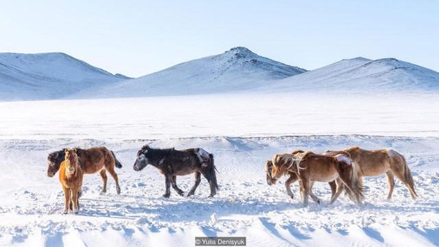 Lễ hội trên hồ đóng băng kỳ lạ của người Mông Cổ: Lạnh kinh hoàng nhưng đẹp đến mê mẩn - Ảnh 7.