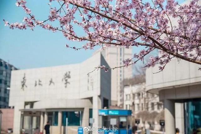 Thấy có quá nhiều sinh viên ế, trường ĐH này đã cho họ nghỉ 6 ngày chỉ để đi ngắm hoa, hẹn hò mùa xuân - Ảnh 3.