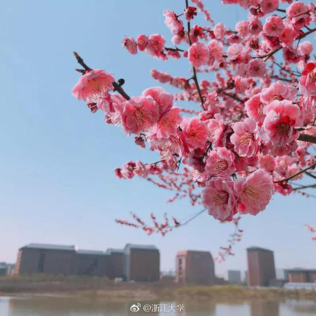 Thấy có quá nhiều sinh viên ế, trường ĐH này đã cho họ nghỉ 6 ngày chỉ để đi ngắm hoa, hẹn hò mùa xuân - Ảnh 5.