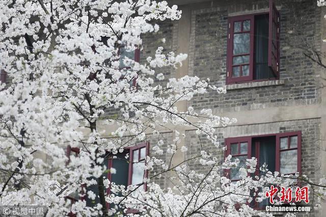 Thấy có quá nhiều sinh viên ế, trường ĐH này đã cho họ nghỉ 6 ngày chỉ để đi ngắm hoa, hẹn hò mùa xuân - Ảnh 6.