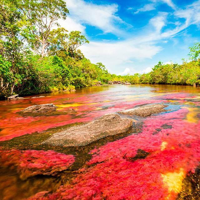 Đây là con sông đẹp nhất thế giới: Lung linh 5 màu sắc, được mệnh danh là cầu vồng sống vi diệu nhất - Ảnh 6.
