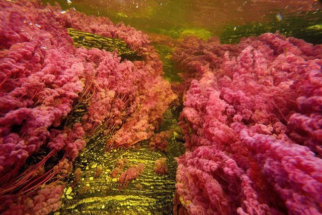 Đây là con sông đẹp nhất thế giới: Lung linh 5 màu sắc, được mệnh danh là cầu vồng sống vi diệu nhất - Ảnh 9.