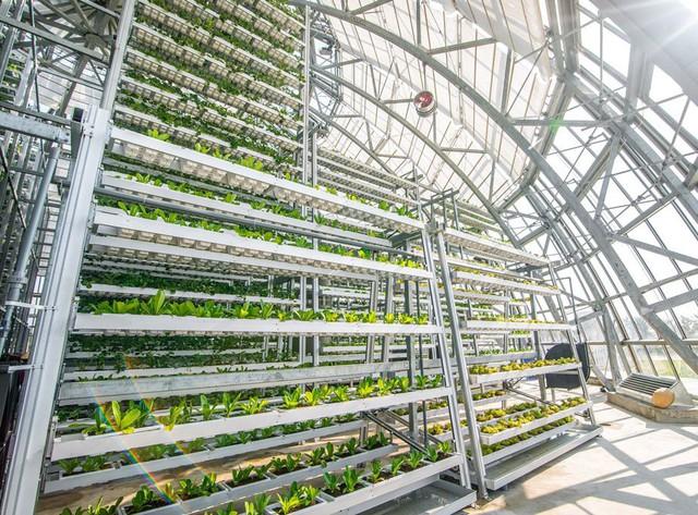 """""""VinEco muốn lan tỏa mô hình nông nghiệp công nghệ cao, thay đổi tư duy làm nông nghiệp của người Việt"""" - Ảnh 2."""