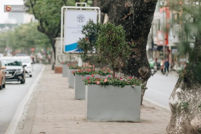 Clip bức xúc: Nhiều người dừng xe giữa đường phố Hà Nội mót hoa trang trí, lãnh đạo Công ty Công viên cây xanh lên tiếng - Ảnh 14.