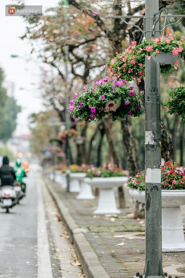 Clip bức xúc: Nhiều người dừng xe giữa đường phố Hà Nội mót hoa trang trí, lãnh đạo Công ty Công viên cây xanh lên tiếng - Ảnh 6.