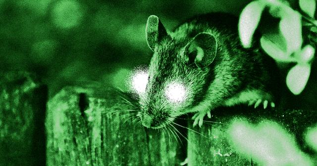 Các nhà khoa học Trung Quốc đang có thể hack mắt chuột nhìn trong đêm, sắp tới là chó và cuối cùng là người - Ảnh 1.