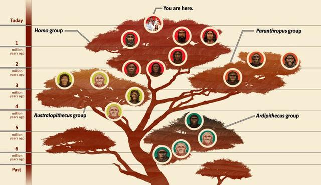 Các nhà khảo cổ vừa phát hiện một giống người lùn tại Philippines, cao chỉ 1,2 mét và biết trèo cây - Ảnh 2.