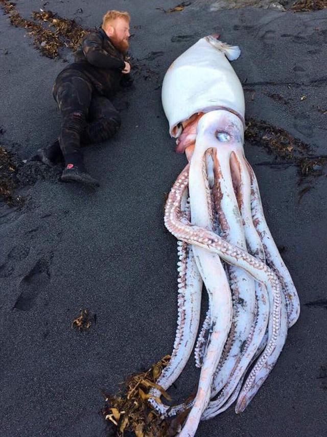 Chùm ảnh: Những tác phẩm nghệ thuật siêu thực nhất của tạo hóa mà con người từng tìm thấy được trên bãi biển - Ảnh 7.