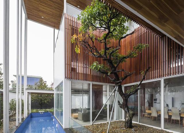 Độc đáo căn nhà ở Huế có thể nhìn xuyên thấu tất cả các phòng - Ảnh 3.
