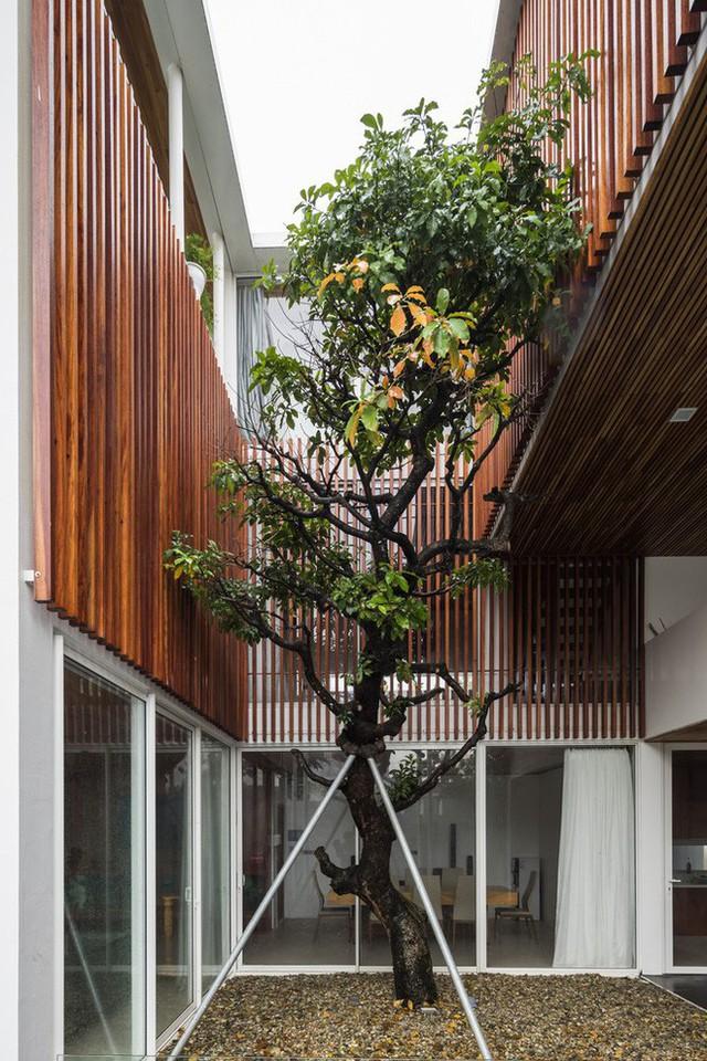 Độc đáo căn nhà ở Huế có thể nhìn xuyên thấu tất cả các phòng - Ảnh 10.