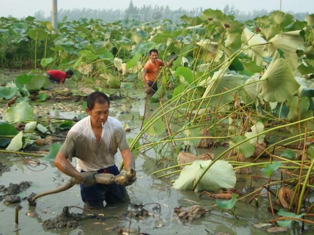 Trung Quốc đang nuôi hơn 1,4 tỷ dân của mình như thế nào? (Phần 1) - Ảnh 15.