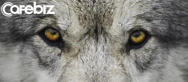 Bản lĩnh đàn ông phải như sói đầu đàn: Mạnh mẽ, quyết liệt khi đối đầu nhưng rộng lượng, ấm áp khi đối xử với gia đình - Ảnh 4.