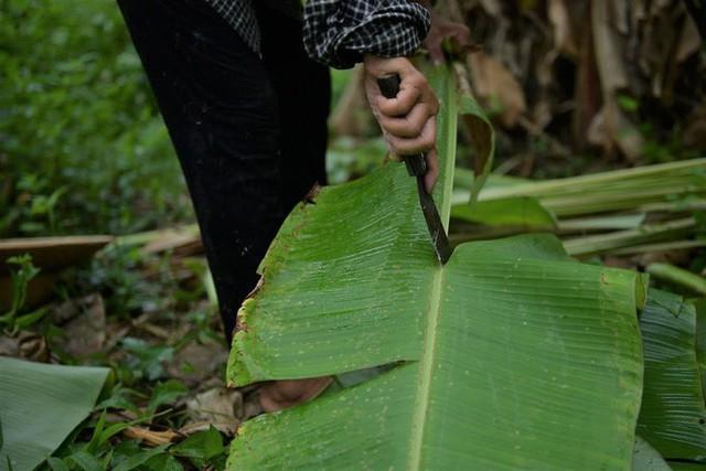 Nghề độc ở Hà Nội: Bán lá chuối rừng, kiếm hàng chục triệu đồng mỗi tháng - Ảnh 7.