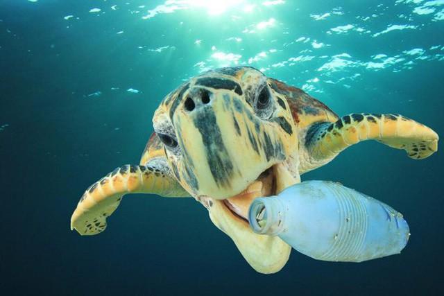 Toàn thế giới loại bỏ rác nhựa: Thái Lan chính thức cấm 3 loại nhựa vào cuối năm 2019 - Ảnh 1.
