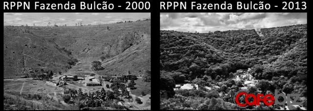 Vợ chồng nhiếp ảnh gia Brazil trồng 2 triệu cây xanh trong suốt 20 năm để hồi sinh khu rừng bị tàn phá, hàng trăm loài động vật lũ lượt kéo về sinh sống - Ảnh 1.