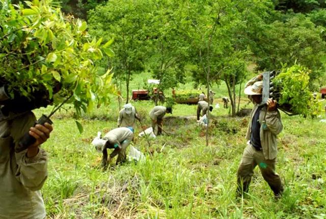 Vợ chồng nhiếp ảnh gia Brazil trồng 2 triệu cây xanh trong suốt 20 năm để hồi sinh khu rừng bị tàn phá, hàng trăm loài động vật lũ lượt kéo về sinh sống - Ảnh 2.