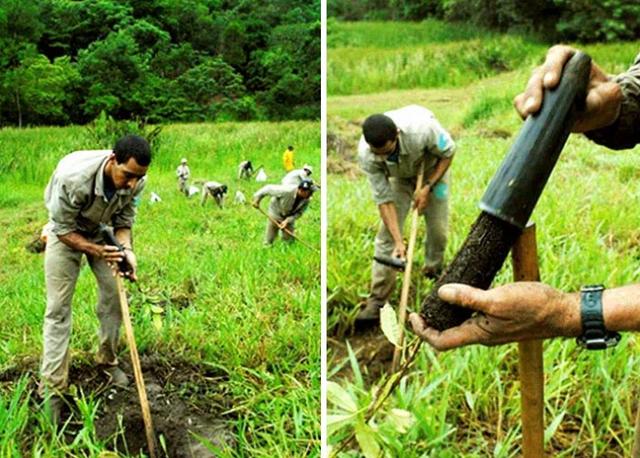 Vợ chồng nhiếp ảnh gia Brazil trồng 2 triệu cây xanh trong suốt 20 năm để hồi sinh khu rừng bị tàn phá, hàng trăm loài động vật lũ lượt kéo về sinh sống - Ảnh 3.