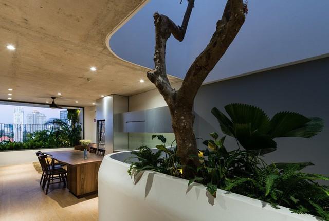 Ngôi nhà 7 tầng vừa ở vừa cho thuê với những khu vườn treo rất nên thơ ở Vũng Tàu - Ảnh 12.