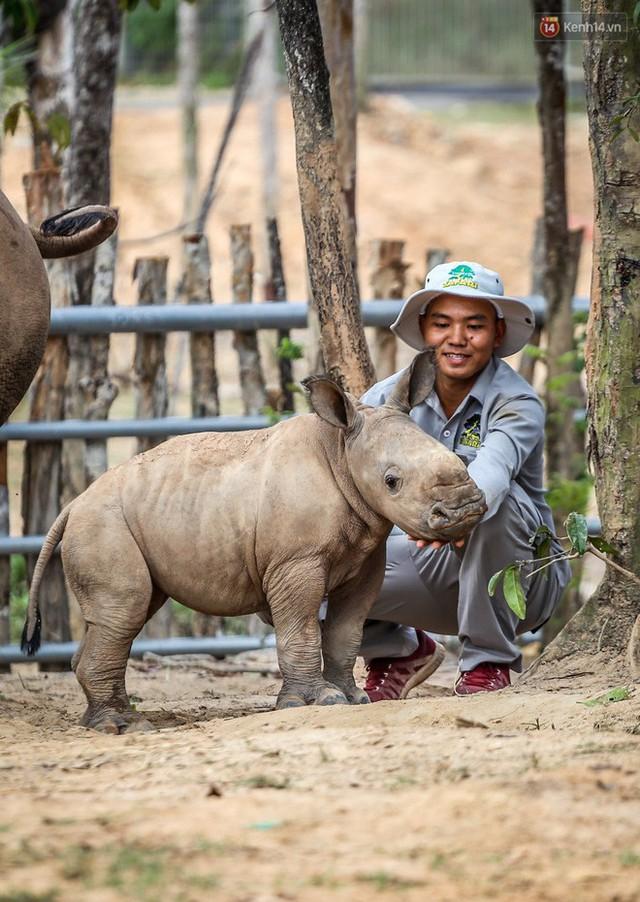 Cận cảnh 2 bé tê giác trắng quý hiếm vừa được sinh ra ở Việt Nam trong thập kỷ qua - Ảnh 8.