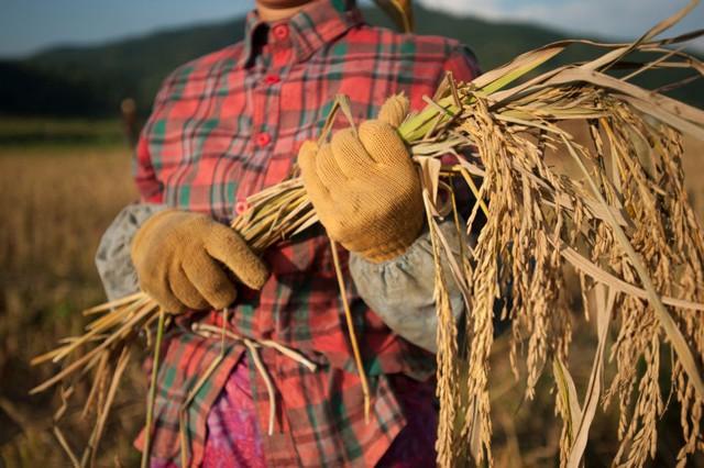 Câu chuyện xúc động của Tiến sĩ trẻ: Nếu nghèo đói là trường đại học tốt nhất, thì người mẹ nông dân của tôi chính là người thầy giáo giỏi nhất của đời tôi - Ảnh 3.