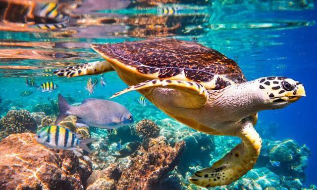 Liên Hợp Quốc cảnh báo: 1 triệu loài sinh vật có nguy cơ tuyệt chủng do bàn tay con người - Ảnh 1.
