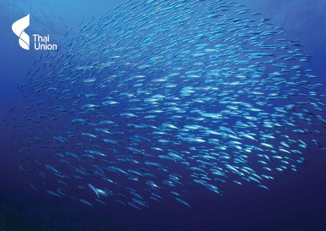 Tập đoàn Vua cá ngừ hộp lớn nhất thế giới đang gặp khó khăn ra sao? - Ảnh 1.