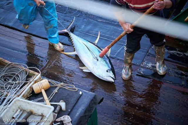Tập đoàn Vua cá ngừ hộp lớn nhất thế giới đang gặp khó khăn ra sao? - Ảnh 2.