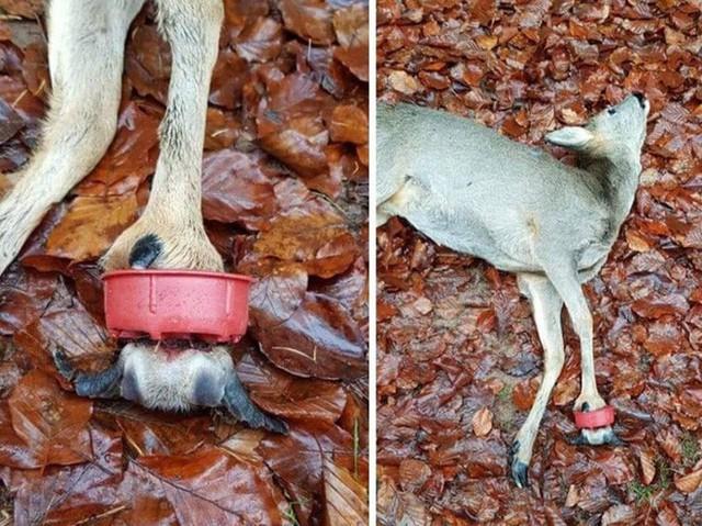 Những hình ảnh gây sốc về hậu quả của rác thải nhựa, ô nhiễm môi trường với thế giới tự nhiên - Ảnh 4.