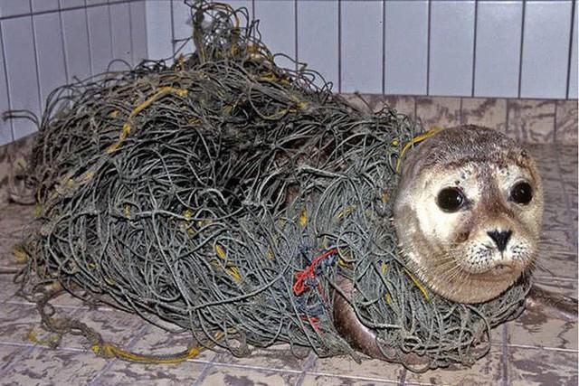 Những hình ảnh gây sốc về hậu quả của rác thải nhựa, ô nhiễm môi trường với thế giới tự nhiên - Ảnh 7.