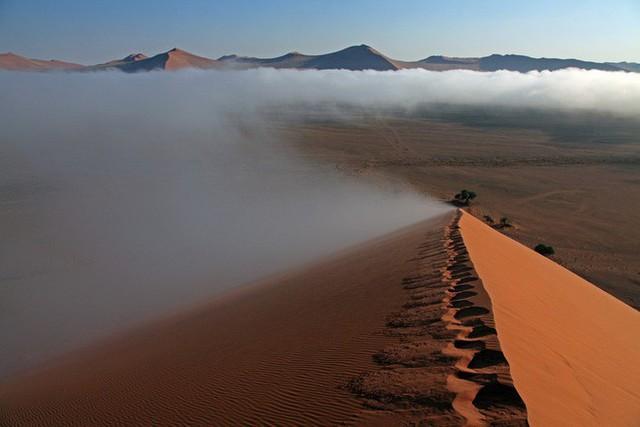 Chiến thuật sinh tồn tuyệt vời của loài bọ sống tại một trong những sa mạc khô nhất thế giới - Ảnh 1.