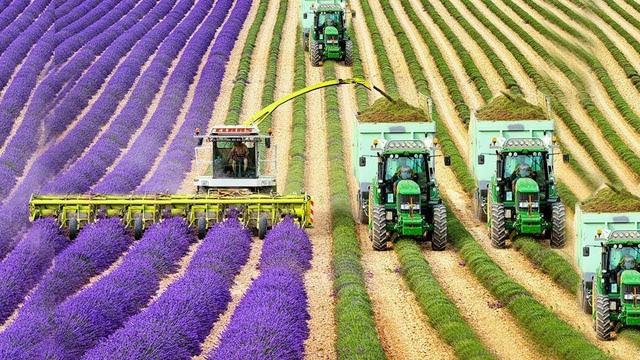 Thị trường hoa: Tại sao một sản phẩm bạn có thể nhổ ra khỏi mặt đất lại có giá cao đến như vậy? - Ảnh 3.