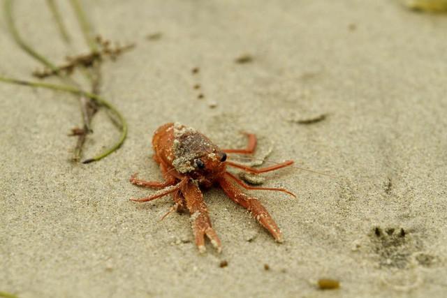 Bi kịch từ con người: Biến đổi khí hậu đang khiến sinh vật biển rơi vào cảnh mù lòa - Ảnh 1.