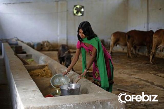 Đại chiến thần bò tại Ấn Độ: Khi nước tiểu bò đắt giá hơn cả sữa - Ảnh 1.