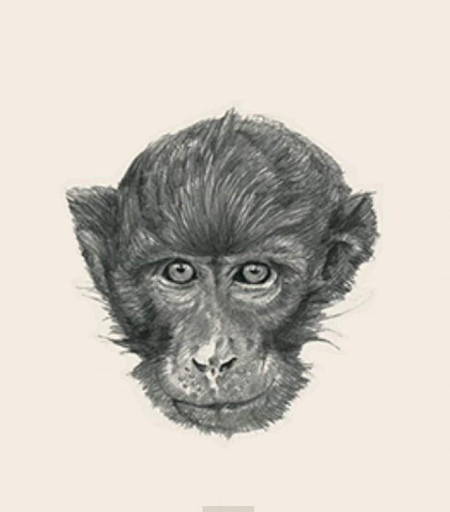 Hướng dẫn tạo hình chiếu động vật 4D đang được cư dân mạng thi nhau làm - Ảnh 8.