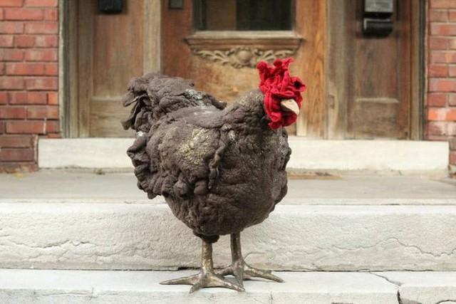 Người Mỹ đang chi cả nghìn USD mua gà về gác chân nhưng PETA không ý kiến gì - Ảnh 2.