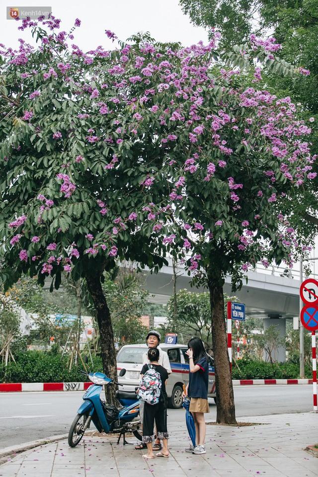 Chùm ảnh: Hà Nội và bản tình ca của những loài hoa mùa hạ thay nhau khoe sắc trên phố - Ảnh 11.