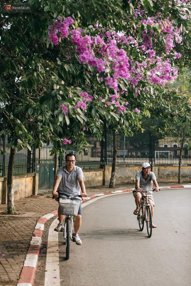 Chùm ảnh: Hà Nội và bản tình ca của những loài hoa mùa hạ thay nhau khoe sắc trên phố - Ảnh 12.