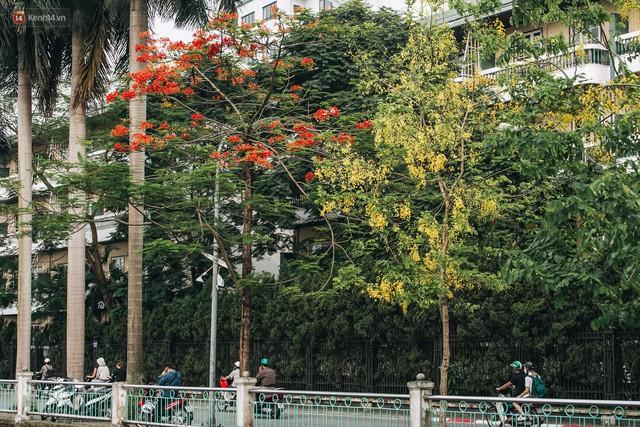 Chùm ảnh: Hà Nội và bản tình ca của những loài hoa mùa hạ thay nhau khoe sắc trên phố - Ảnh 16.