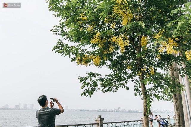 Chùm ảnh: Hà Nội và bản tình ca của những loài hoa mùa hạ thay nhau khoe sắc trên phố - Ảnh 20.