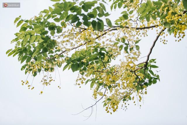 Chùm ảnh: Hà Nội và bản tình ca của những loài hoa mùa hạ thay nhau khoe sắc trên phố - Ảnh 22.